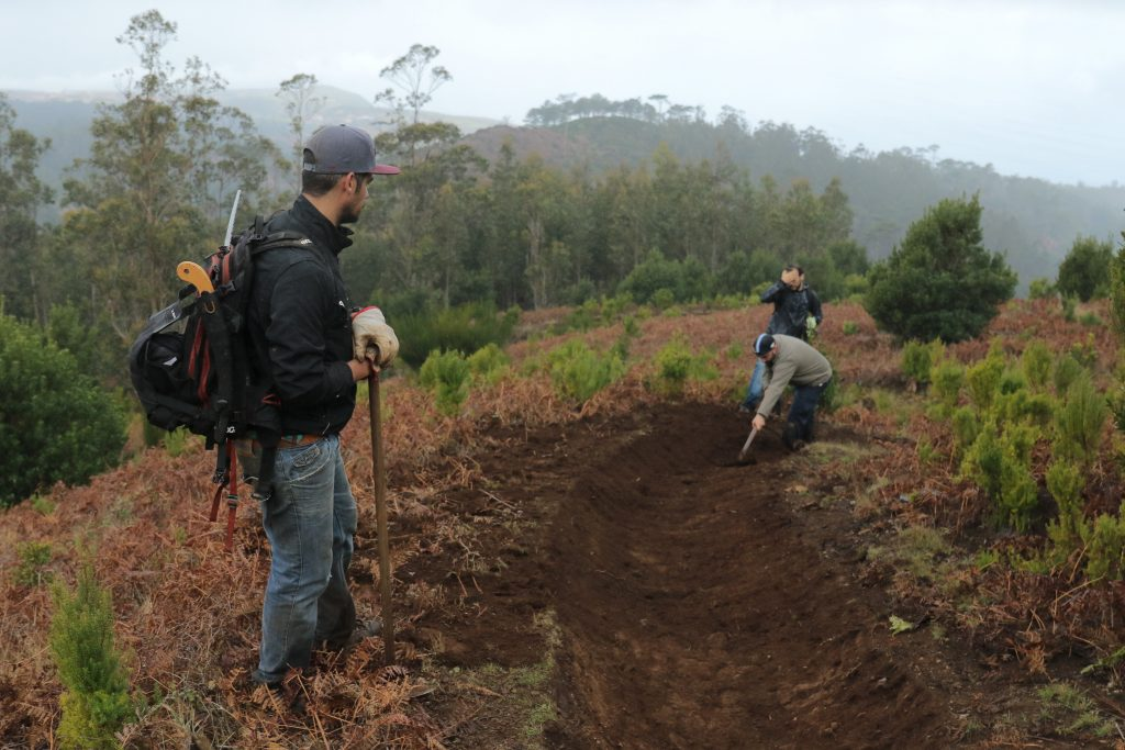 Freeride Madeira: 20% for the trails